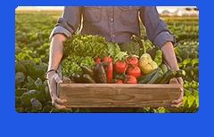 给消费者介绍农场当季供应的农产品